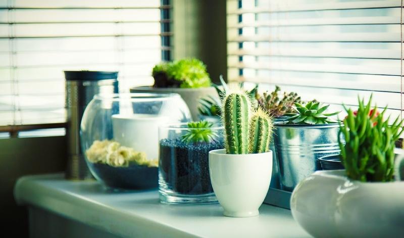 Vos plantes spirituelles