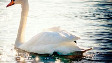 Photo of Signes, présages et messages: oiseaux