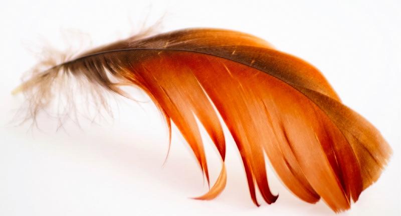 plume brun rouge