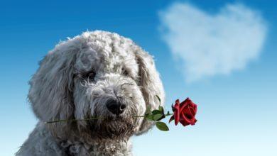 Photo of Pourquoi j'aime mon chien plus que je ne t'aime