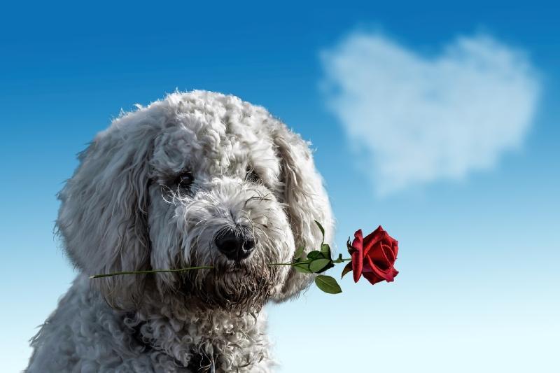 j'aime mon chien valentine