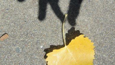 Photo of Psychokinésie: déplacer des objets avec votre esprit
